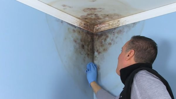 How to Use Mold Resistant Paint